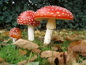 :check those gorgeous shrooms: