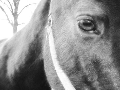 the_horses_eye_preview